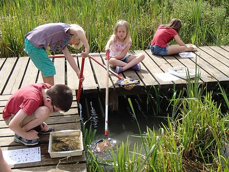 Pond dipping at Hinchingbrooke Country Park
